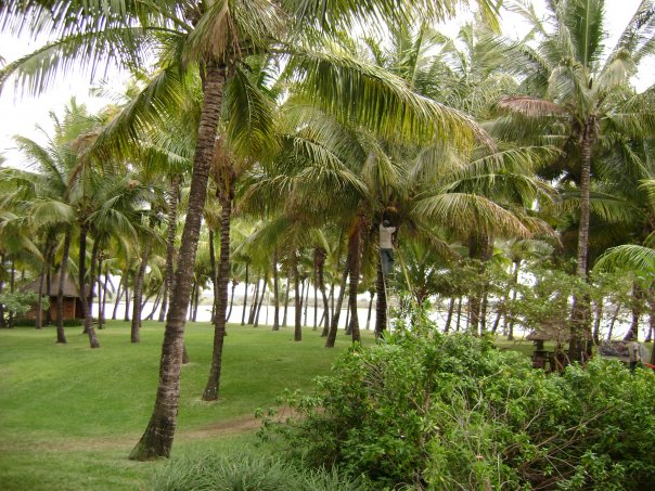 The gardens of the One&Only Le Saint Geran